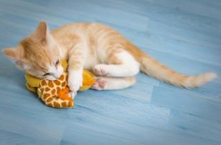 cat-1056660_1280