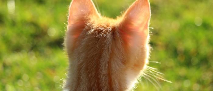 cat-1196246_1920