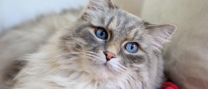 cat-620030_1920