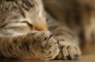 cat-735817_1920