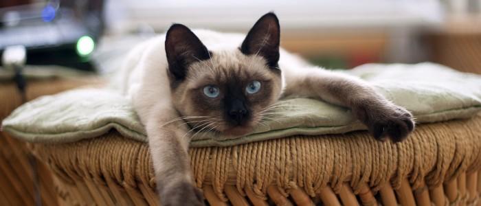 cat-882049_1920