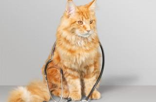 cat-health