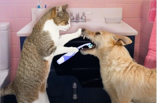 cute-cat-cleaning-dogs-31304930rdk