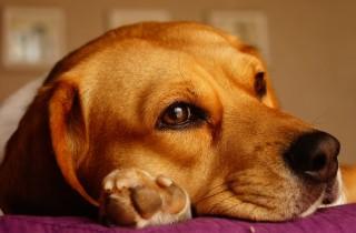 dog-1264667_1920