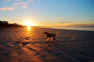 dog-beach2-2560