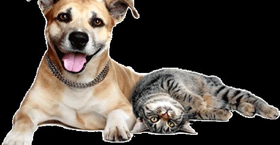 dog-cat-1