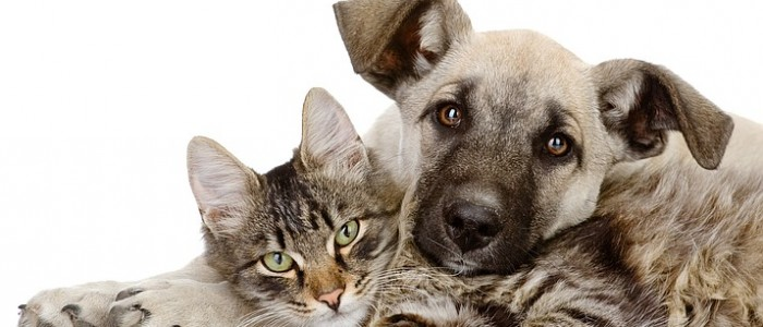 dog_and_cat_t715