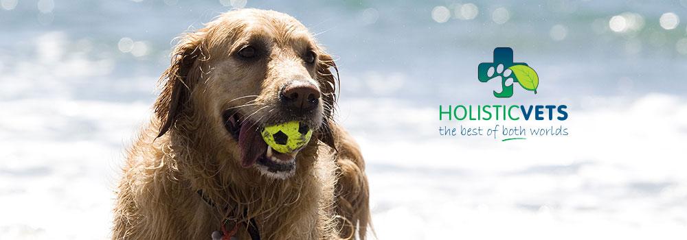 hv-dog-slide-with-logo