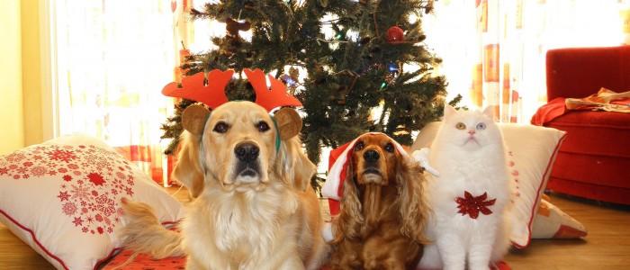 keep pets safe holiday season